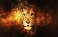 ΝΕΑ ΕΙΔΗΣΕΙΣ (Επική μάχη λιονταριού με λεοπάρδαλη: Ο απόλυτος δολοφόνος εναντίον του απόλυτου μαχητή (ΒΙΝΤΕΟ))