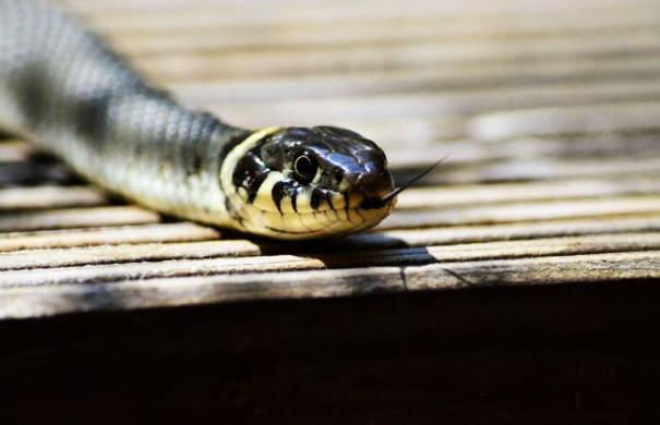 φίδια-22-696x455
