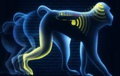 ΝΕΑ ΕΙΔΗΣΕΙΣ (Παράλυτες μαϊμούδες περπάτησαν χάρη σε ασύρματα εμφυτεύματα (ΒΙΝΤΕΟ))