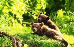 ΝΕΑ ΕΙΔΗΣΕΙΣ (Bόλτες στην Καστοριά έκαναν δύο μικρές αρκούδες)