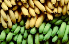 ΝΕΑ ΕΙΔΗΣΕΙΣ (Ώριμη ή άγουρη; Ποια μπανάνα είναι προτιμότερη για την υγεία)