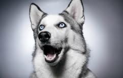 ΝΕΑ ΕΙΔΗΣΕΙΣ (Η απίστευτη έκπληξη σ΄ έναν σκύλο (ΒΙΝΤΕΟ))