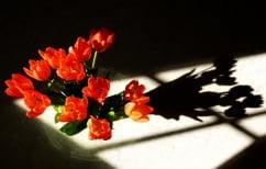 ΝΕΑ ΕΙΔΗΣΕΙΣ (Το μαγικό κόλπο πάνω σε μια σκιά με ένα ψαλίδι και ένα λουλούδι (ΒΙΝΤΕΟ))