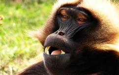 ΝΕΑ ΕΙΔΗΣΕΙΣ (Γιατί οι πίθηκοι δε μιλάνε)