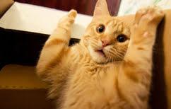 ΝΕΑ ΕΙΔΗΣΕΙΣ (Ιδιοκτήτης κάνει αντίποινα στη γάτα του (ΒΙΝΤΕΟ))