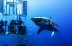 ΝΕΑ ΕΙΔΗΣΕΙΣ (Απίστευτο ΒΙΝΤΕΟ: Δύτης εγκλωβίζεται σε κλουβί με καρχαρία)
