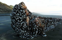 ΝΕΑ ΕΙΔΗΣΕΙΣ (Μυστηριώδες αντικείμενο ξεβράστηκε στη Νέα Ζηλανδία και πυροδότησε σενάρια συνωμοσίας (ΦΩΤΟ))