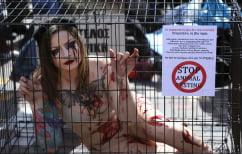 ΝΕΑ ΕΙΔΗΣΕΙΣ (Αθήνα: Διαμαρτυρία σε κλουβιά για την κακοποίηση των ζώων)