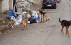 ΝΕΑ ΕΙΔΗΣΕΙΣ (Σκουπίδια: Προσοχή κατά την επαφή πολιτών με οικόσιτα ή αδέσποτα ζώα)