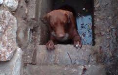 ΝΕΑ ΕΙΔΗΣΕΙΣ (Διασώθηκε σκύλος παγιδευμένος για ώρες σε φρεάτιο στη Λαμία)