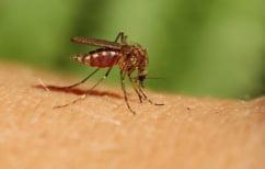 ΝΕΑ ΕΙΔΗΣΕΙΣ (Πρώτο κρούσμα του ιού του Δυτικού Νείλου στην Ελλάδα)