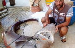 ΝΕΑ ΕΙΔΗΣΕΙΣ (Απίστευτο: Επιασαν καρχαρία 180 κιλών στους Γαργαλιάνους!)