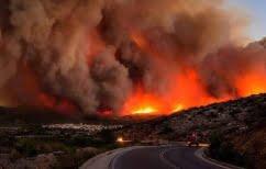 ΝΕΑ ΕΙΔΗΣΕΙΣ (Ζάκυνθος:Οικολογική καταστροφή από τις πρόσφατες πυρκαγιές)