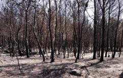 ΝΕΑ ΕΙΔΗΣΕΙΣ (Ζάκυνθος: Αναδασωτέες όλες οι καμένες εκτάσεις)