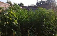 ΝΕΑ ΕΙΔΗΣΕΙΣ (Τρεις συλλήψεις σε Πέλλα και Σέρρες για καλλιέργεια κάνναβης)