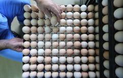 ΝΕΑ ΕΙΔΗΣΕΙΣ (Μολυσμένα αυγά: Οι Ολλανδοί ήξεραν για το εντομοκτόνο από το 2016)