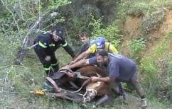 ΝΕΑ ΕΙΔΗΣΕΙΣ (Πτολεμαΐδα:Πυροσβέστες απεγκλώβισαν ταύρο από χαράδρα βάθους 80 μέτρων)