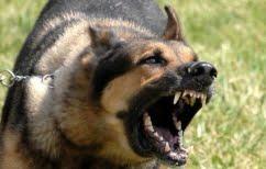 ΝΕΑ ΕΙΔΗΣΕΙΣ (Σαντορίνη: Σοβαρός τραυματισμός 12χρονου από επίθεση σκύλου)