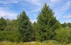 ΝΕΑ ΕΙΔΗΣΕΙΣ (Πρόσληψη 100 δασοπόνων και δασολόγων για την σύνταξη δασικών χαρτών)