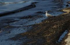 ΝΕΑ ΕΙΔΗΣΕΙΣ (Πρόεδρος Εταιρείας Τοξικολογίας: Σε δύο χρόνια θα καθαρίσουν οι θάλασσες)
