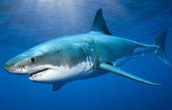 ΝΕΑ ΕΙΔΗΣΕΙΣ (Καρχαρίας 4 μέτρων πιάστηκε στον Αστακό Αιτωλοακαρνανίας)