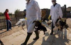 ΝΕΑ ΕΙΔΗΣΕΙΣ (Βουλγαρία: Δύο κρούσματα της γρίπης των πτηνών)