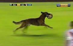 ΝΕΑ ΕΙΔΗΣΕΙΣ (Βολιβία: Ο «Μέσι» των σκύλων)