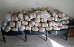 ΝΕΑ ΕΙΔΗΣΕΙΣ (Ιωάννινα: Κατασχέθηκε ινδική κάνναβη 230 κιλών)