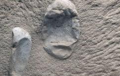 ΝΕΑ ΕΙΔΗΣΕΙΣ (Ανακάλυψαν 215 απολιθωμένα αυγά πτερόσαυρων)