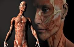 ΝΕΑ ΕΙΔΗΣΕΙΣ (Ανακαλύφθηκε ένα νέο μεγάλο «αόρατο» όργανο στο ανθρώπινο σώμα)