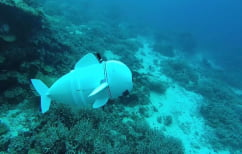 ΝΕΑ ΕΙΔΗΣΕΙΣ (H SoFi είναι το πρώτο ρομποτικό ψάρι που στόχο έχει… να σώσει τους ωκεανούς)