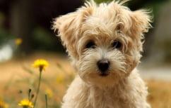 ΝΕΑ ΕΙΔΗΣΕΙΣ (Η επιστήμη απαντά: Τι κάνει τόσο ιδιαίτερους τους σκύλους;)