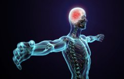 ΝΕΑ ΕΙΔΗΣΕΙΣ (Έρευνα: Μόνο το 43% των κυττάρων του ανθρώπινου σώματός είναι… ανθρώπινα)