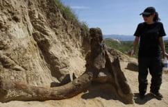ΝΕΑ ΕΙΔΗΣΕΙΣ (Στα Σκόπια βρέθηκε προϊστορικός ελέφαντας που ζούσε πριν τα μαμούθ)