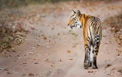 ΝΕΑ ΕΙΔΗΣΕΙΣ (SOS από WWF: Μέσα σε 40 χρόνια η Γη έχασε το 60% των άγριων ζώων)