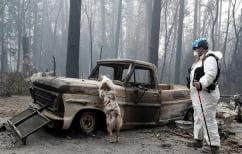 ΝΕΑ ΕΙΔΗΣΕΙΣ (Ανείπωτη τραγωδία στην Καλιφόρνια: 63 οι νεκροί από τις πυρκαγιές – 631 αγνοούμενοι)