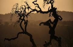 ΝΕΑ ΕΙΔΗΣΕΙΣ (Περισσότερα από το 40% των ειδών δένδρων στη Γηραιά Ήπειρο απειλούνται με εξαφάνιση)