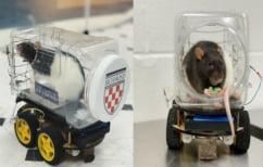 ΝΕΑ ΕΙΔΗΣΕΙΣ (Ερευνητές έμαθαν σε ποντίκια να… οδηγούν πολύ μικρά αυτοκίνητα)