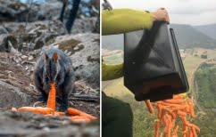 ΝΕΑ ΕΙΔΗΣΕΙΣ (Από ελικόπτερο ταΐζουν τα ζώα που γλίτωσαν τη φωτιά στην Αυστραλία)