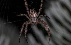 ΝΕΑ ΕΙΔΗΣΕΙΣ (Αυστραλία: Μέτα τις φωτιές και τις πλημμύρες έρχονται οι… φονικές αράχνες)