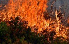 ΝΕΑ ΕΙΔΗΣΕΙΣ (Μάχη της πυροσβεστικής με τις φλόγες στη Δαδιά Έβρου)