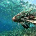 ΝΕΑ ΕΙΔΗΣΕΙΣ (Μελέτη προτείνει επανεξέταση διαχείρισης θαλάσσιων ξενικών ειδών στη Μεσόγειο)