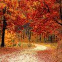 ΝΕΑ ΕΙΔΗΣΕΙΣ (Τα φύλλα των δέντρων πέφτουν νωρίτερα το φθινόπωρο λόγω της κλιματικής αλλαγής)