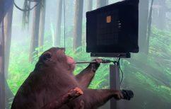 ΝΕΑ ΕΙΔΗΣΕΙΣ (Τεχνολογική επανάσταση: Μαϊμού παίζει βιντεοπαιχνίδι με τη σκέψη~Nέο πείραμα του Έλον Μασκ)