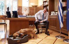 ΝΕΑ ΕΙΔΗΣΕΙΣ (Κυριάκος Μητσοτάκης: Υιοθέτησε σκυλάκι από καταφύγιο που επισκέφθηκε – Δείτε τον «Πίνατ»)