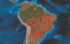 ΝΕΑ ΕΙΔΗΣΕΙΣ (Παράνομη η αποψίλωση του δάσους του Αμαζονίου στο 94%)