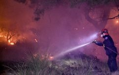 ΝΕΑ ΕΙΔΗΣΕΙΣ (Tα μέτρα της κυβέρνησης για τους πληγέντες της πυρκαγιάς στα Γεράνεια Όρη)