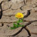 ΝΕΑ ΕΙΔΗΣΕΙΣ (Έκθεση ΟΗΕ: Η ξηρασία κινδυνεύει να γίνει η επόμενη πανδημία)